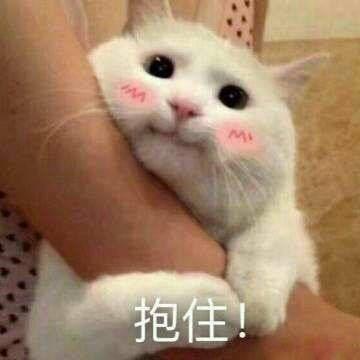 哭唧唧表情包小猫_小猫牵手表情包图片