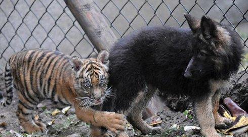 动物世界大洋马交配_动物世界: 那些能拿表情大奖的动物们