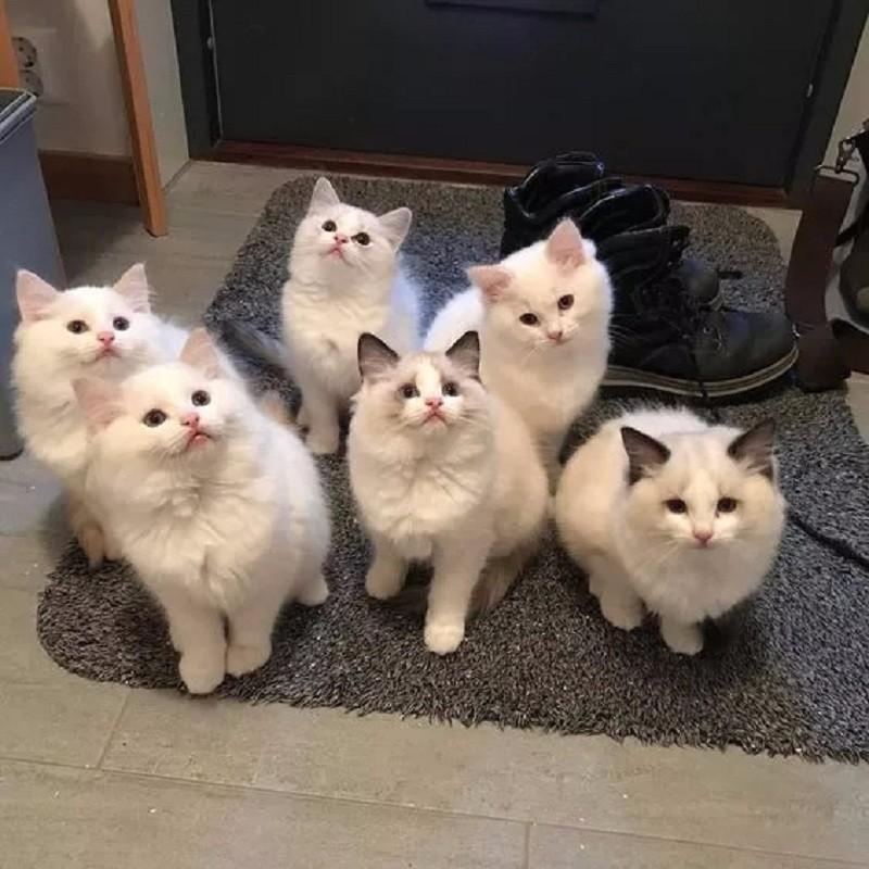 可爱动物家庭照,好有爱啊!