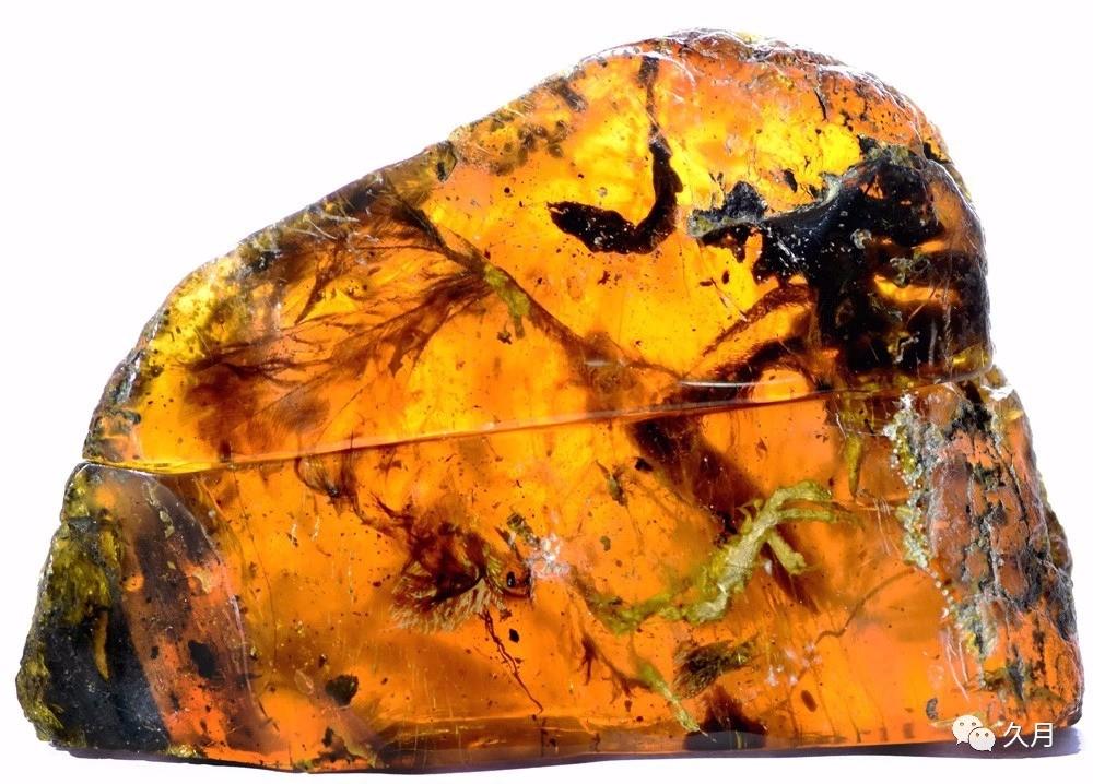 近年来,琥珀里不断发现远古时期的雏鸟,恐龙,以及发现了上亿年的蛇等