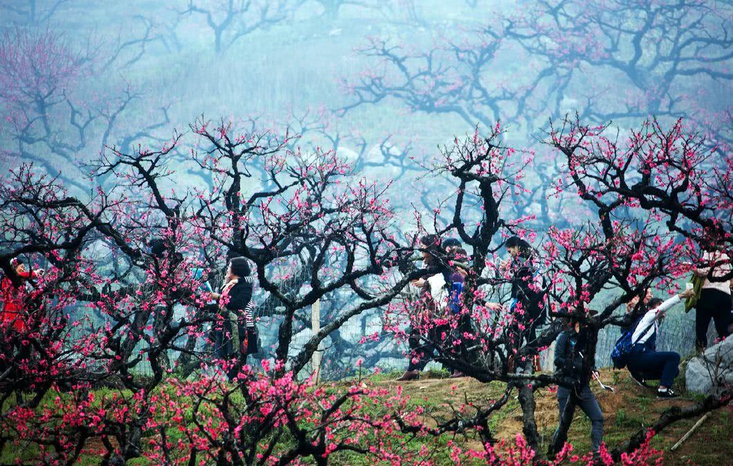 去 韶关乐昌的九峰山了 逃离广州,一次性看遍三月的花海!
