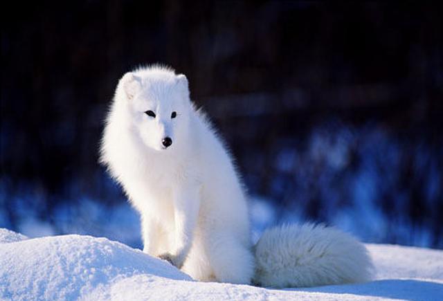 狐狸��h����j˞j���_寡妇路救一狐狸, 哪只是狐仙, 最后还她一个愿望