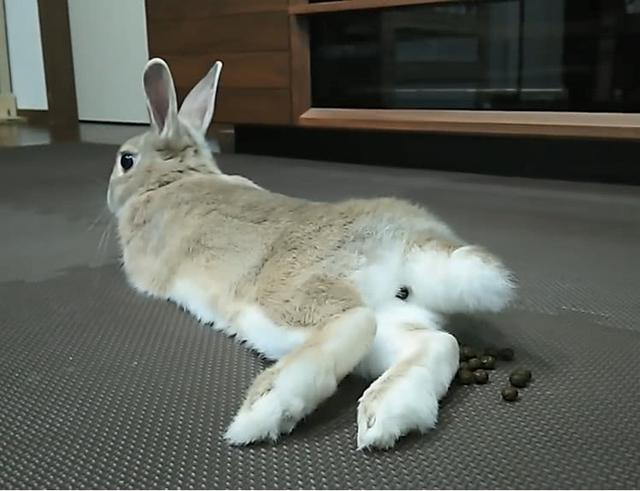 鹦鹉随便躺着就把网友完了办大事,兔子:墙都不扶只服你对人生过山车的v鹦鹉图片