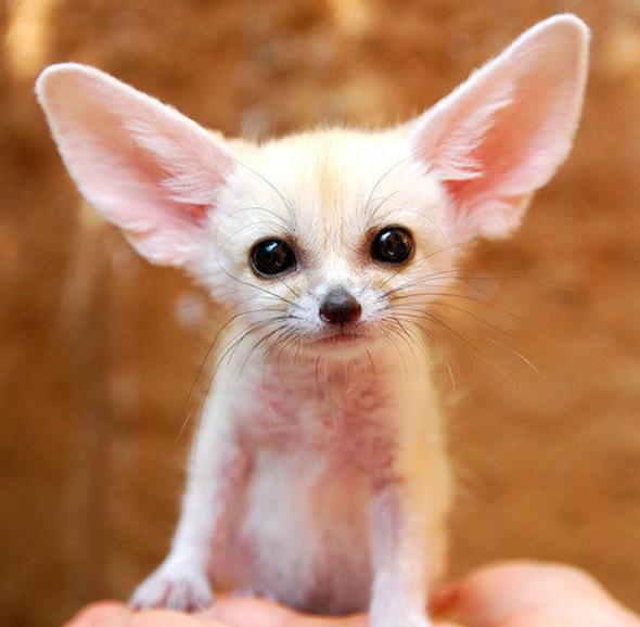 最小最可爱的狗图片