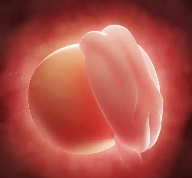 怀孕1-10月胎儿生长发育图 , 看看胎宝宝可爱模样图片