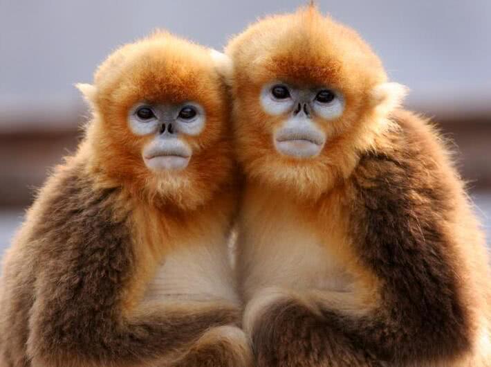 中国5种濒临灭绝的动物,第3种被誉为是世界上最可爱的