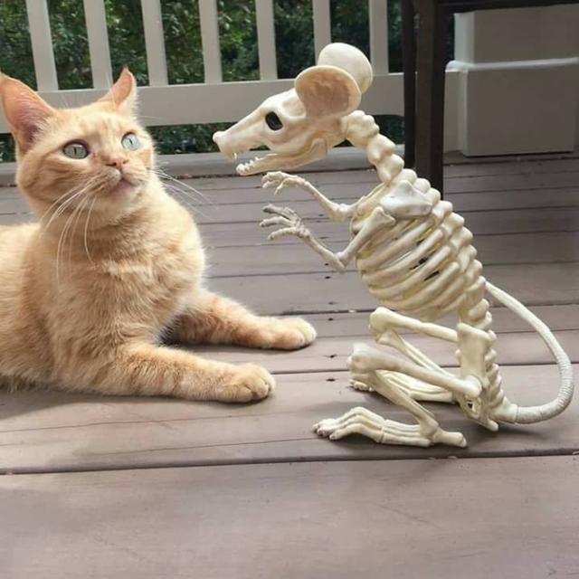 喵看到主人喂给另一只猫东西后,秒变表情包图片