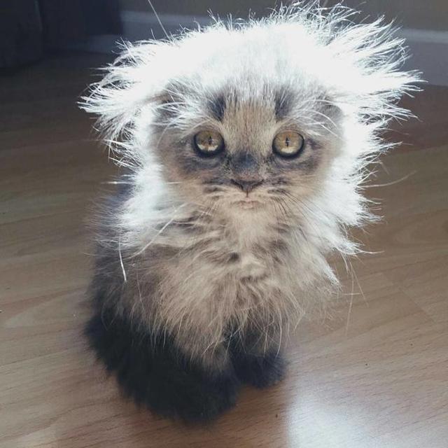 你每天早上起床是不是就是这样一幅懵懵的,呆呆的表情?