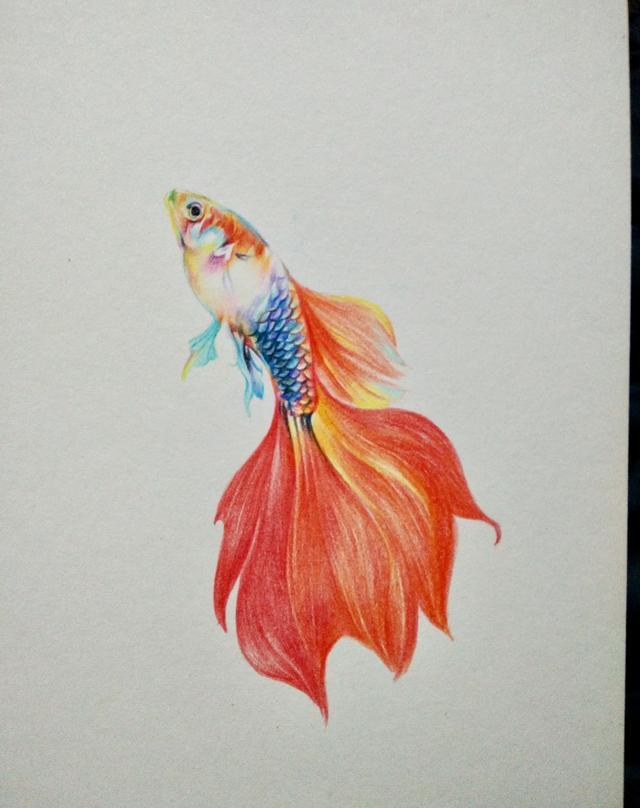 彩铅手绘金鱼教程,年年有鱼呀