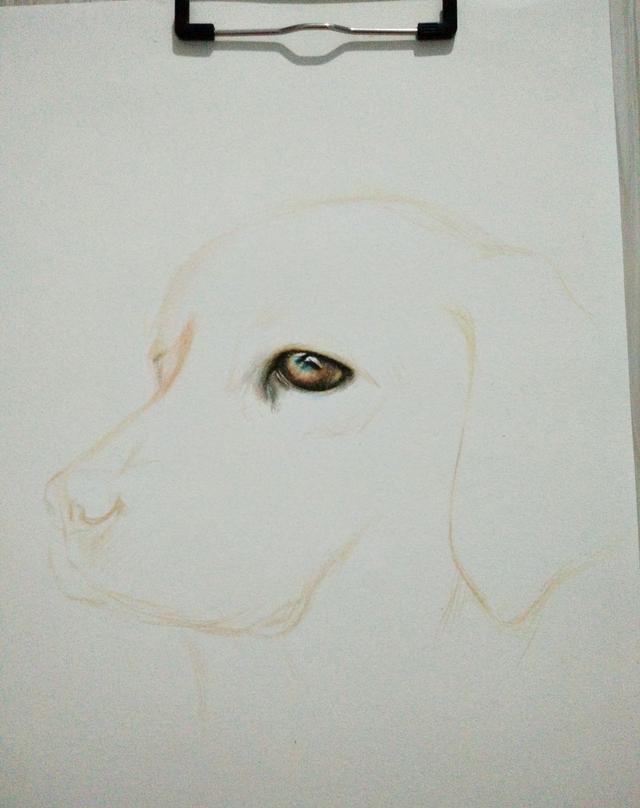 彩铅手绘狗狗教程,像导盲犬致敬