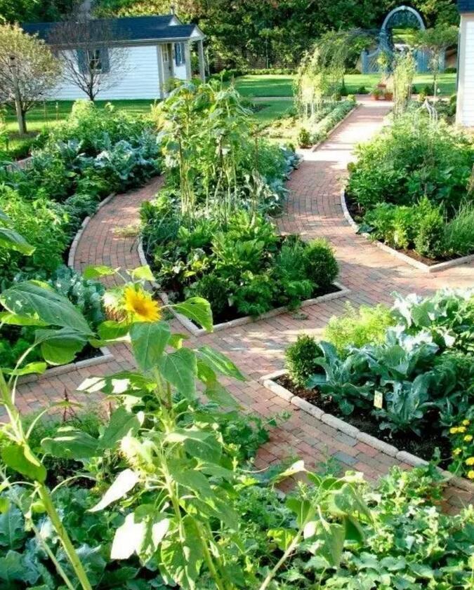 私家庭院菜园, 家乡的回忆图片