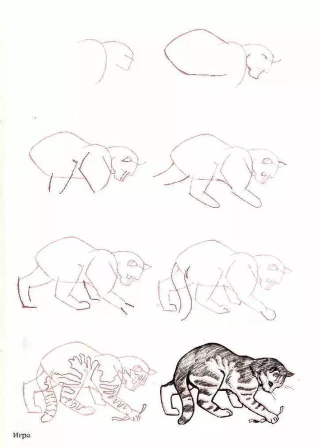 猫咪简笔画,50个干货小教程