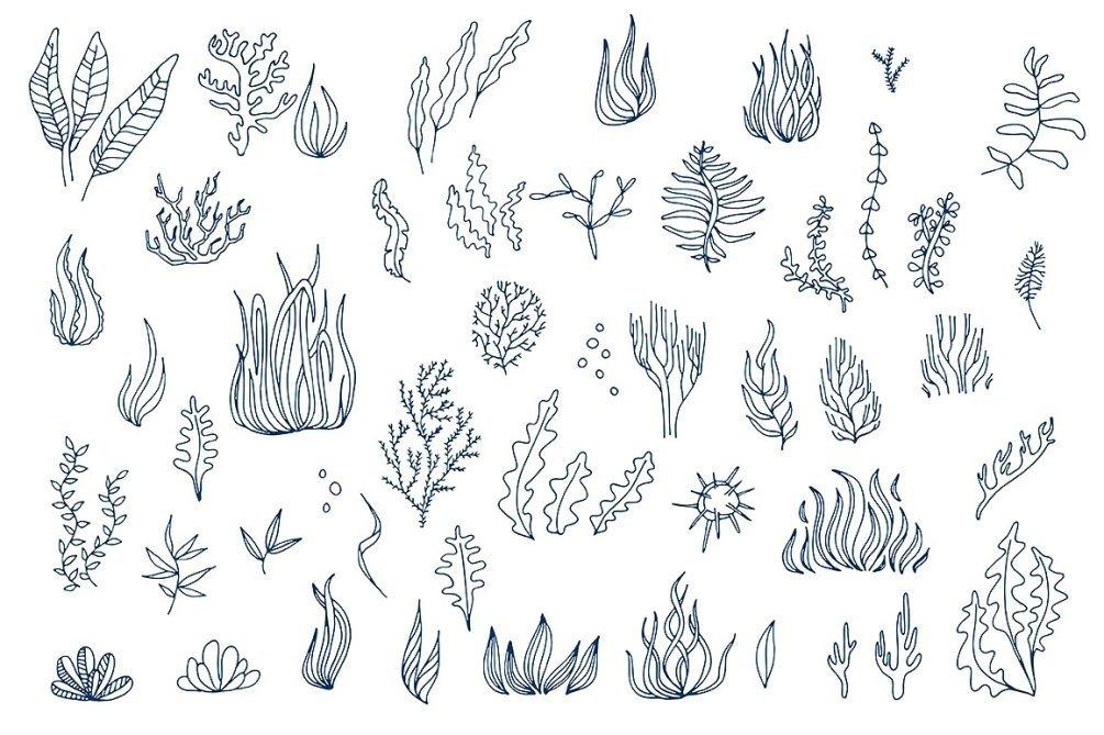 海鲜海产动物包装线稿鱼虾蟹手绘海洋生物ai psd设计素材 更多详情