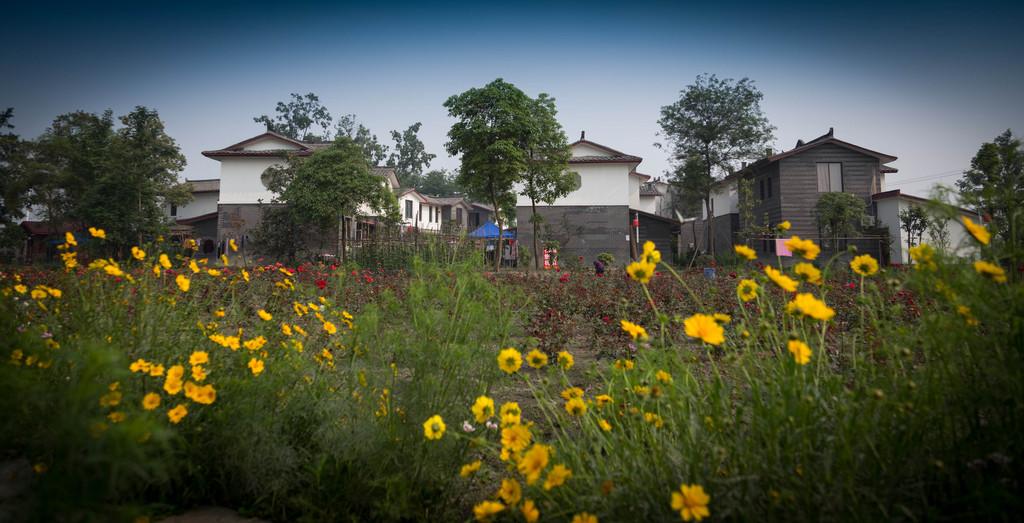 成都的青杠树村,美丽的乡村,绿水鲜花