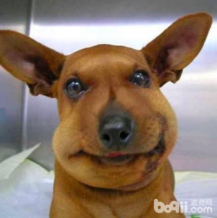当狗狗被1只表情叮肿以后,蚊子皮肤被小孩咬了以后蜜蜂是青的图片