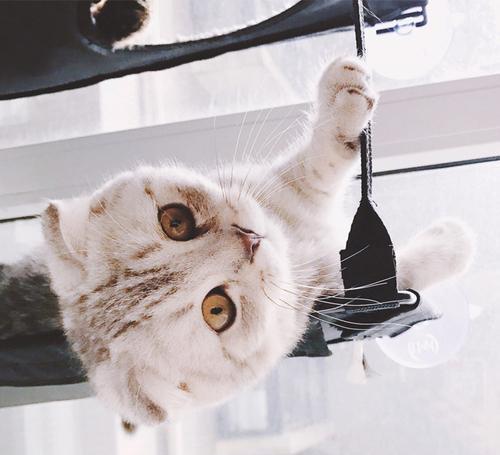 猫咪吊床 吸盘式窗台吊床猫窝猫咪猫爬架 宠物猫用品 猫床图片