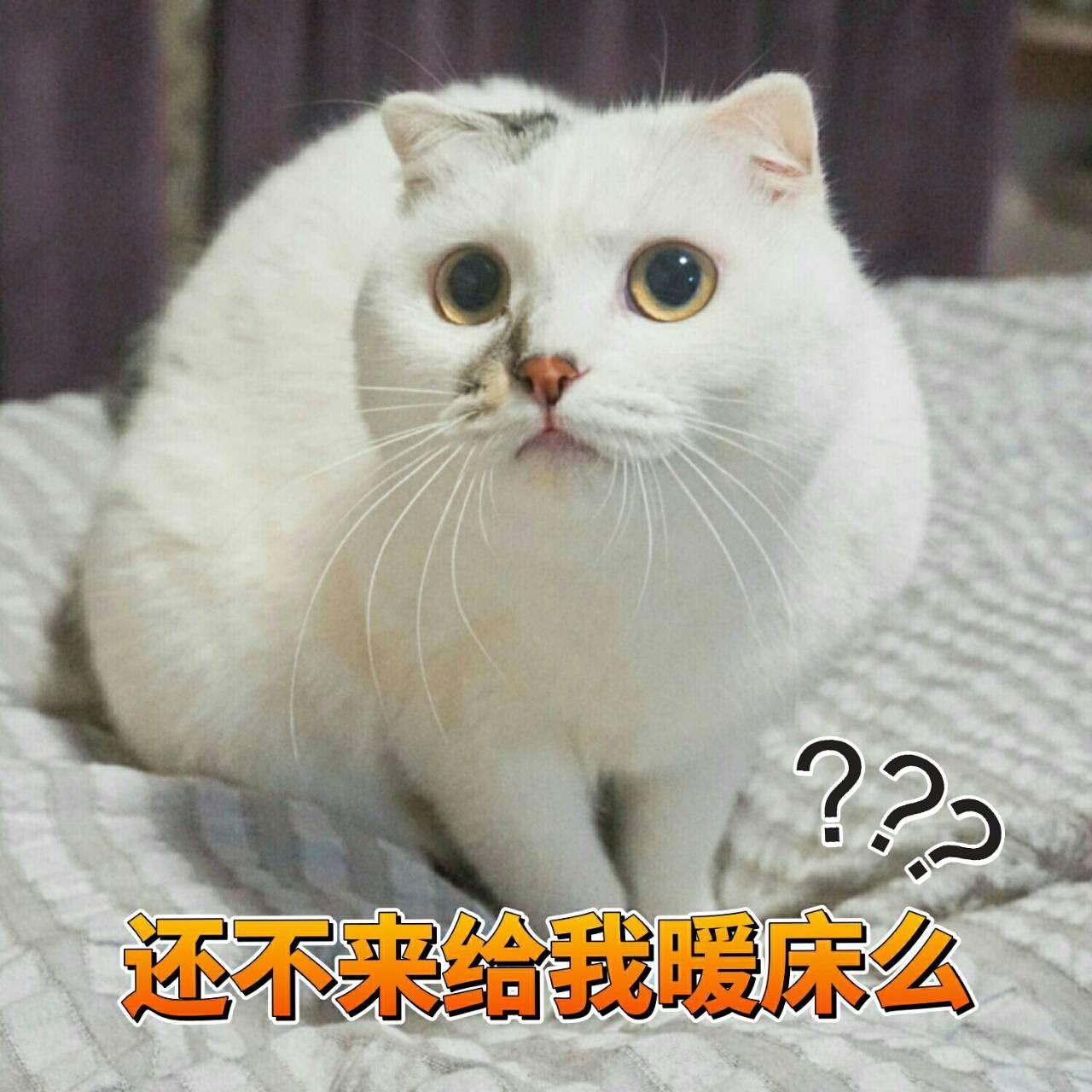 一组可爱表情表情的猫咪分享图蜜桃包可爱怎么画的图片
