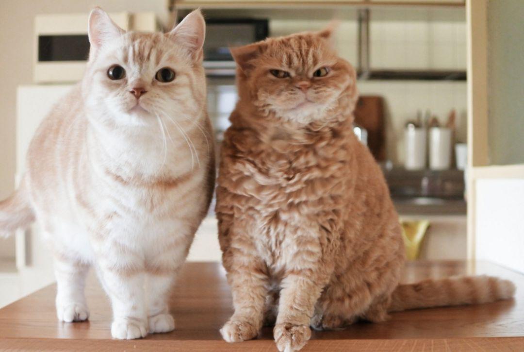 ins上一只常犯困的橘猫,每一个动作都做表情表情包表情恭喜图片图片