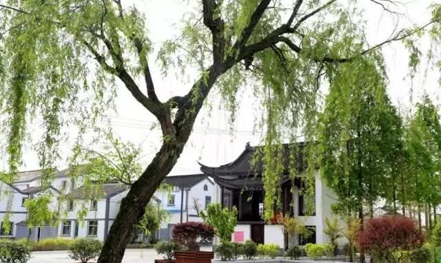常州市新北区西夏墅镇梅林村图片