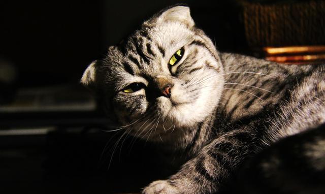 观察猫的眼睛,了解他们在想什么!
