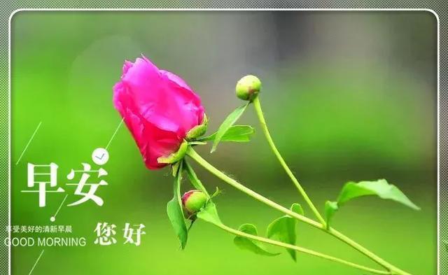新的一月最美早上好问候语温馨句子鲜花图片图片