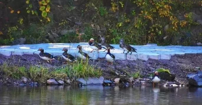 摄影师的真爱!这么美的坝上春天,来得晚一点、短一点都没关系!