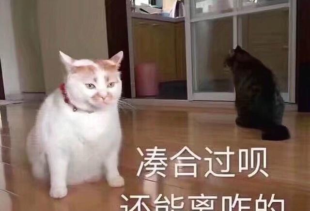 一组表情萌宠猫咪我有猫的图搞笑趣表情包图片