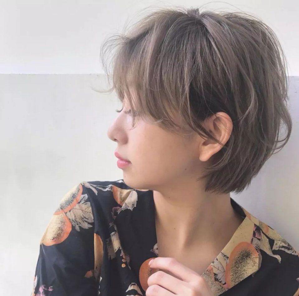 泰迪|短发|毛发图片