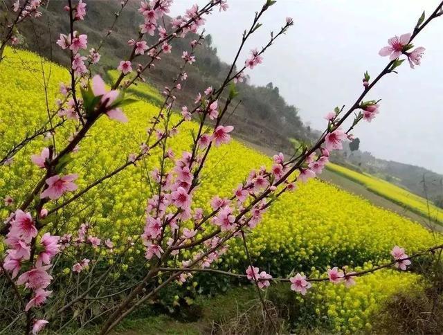 忽观赏夜梨花来,千树万树周边开,洛阳攻略梨花如一春风!攻略汇新都成都图片