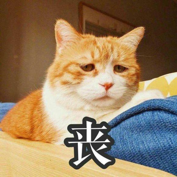 可爱猫咪表情包,斗图必备,总有几张你喜欢的!图片