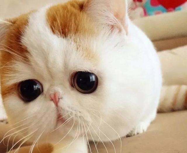 壁纸 动物 猫 猫咪 小猫 桌面 640_524