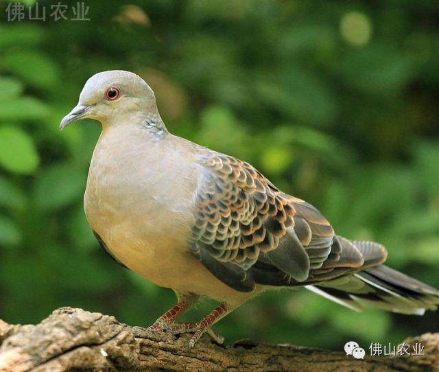 动物鸽鸟类鸟乌龟640_542给鸽子拍片图片