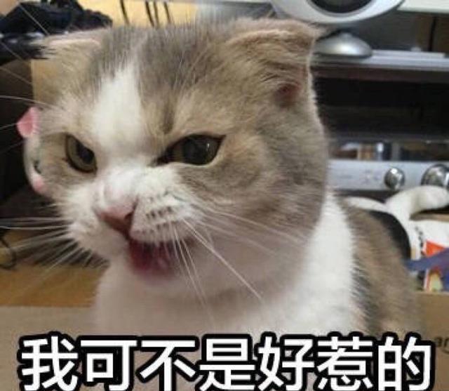 又凶还萌的表情表情项中纪委八猫咪包图片