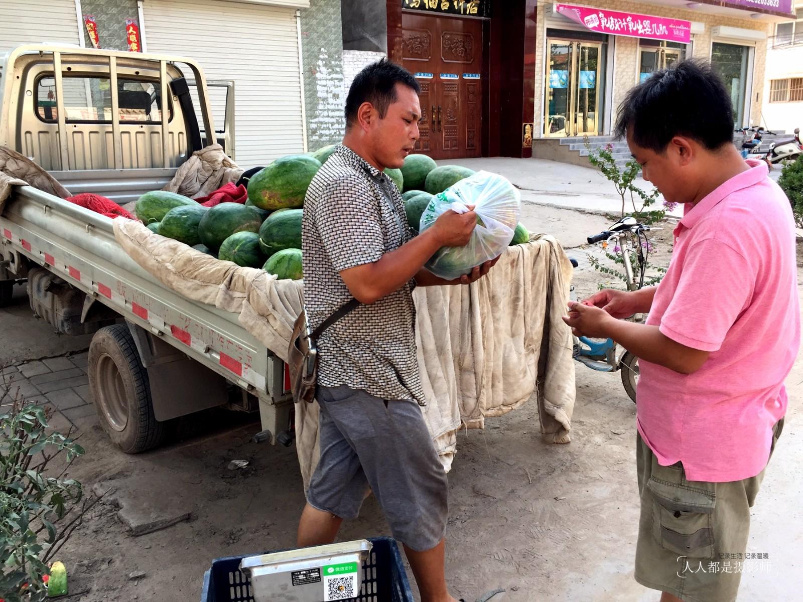 沙地西瓜个头普遍较大,摄影师发现,个头大点的,差不多有20斤重,而那些