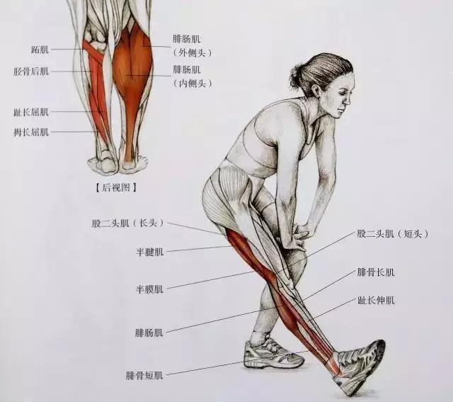 四月不减肥,五月小粗腿!教你一招减肥后可以粗腿!避免吗揉肚子健身图片