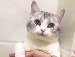 一组猫咪萌宠表情我有猫的表情包眼侧图片