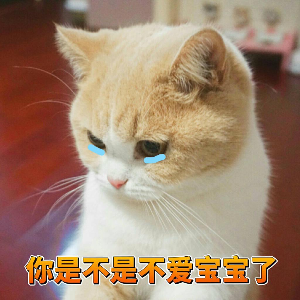 一组可爱草莓表情的表情分享图的猫咪举蜜桃包图片