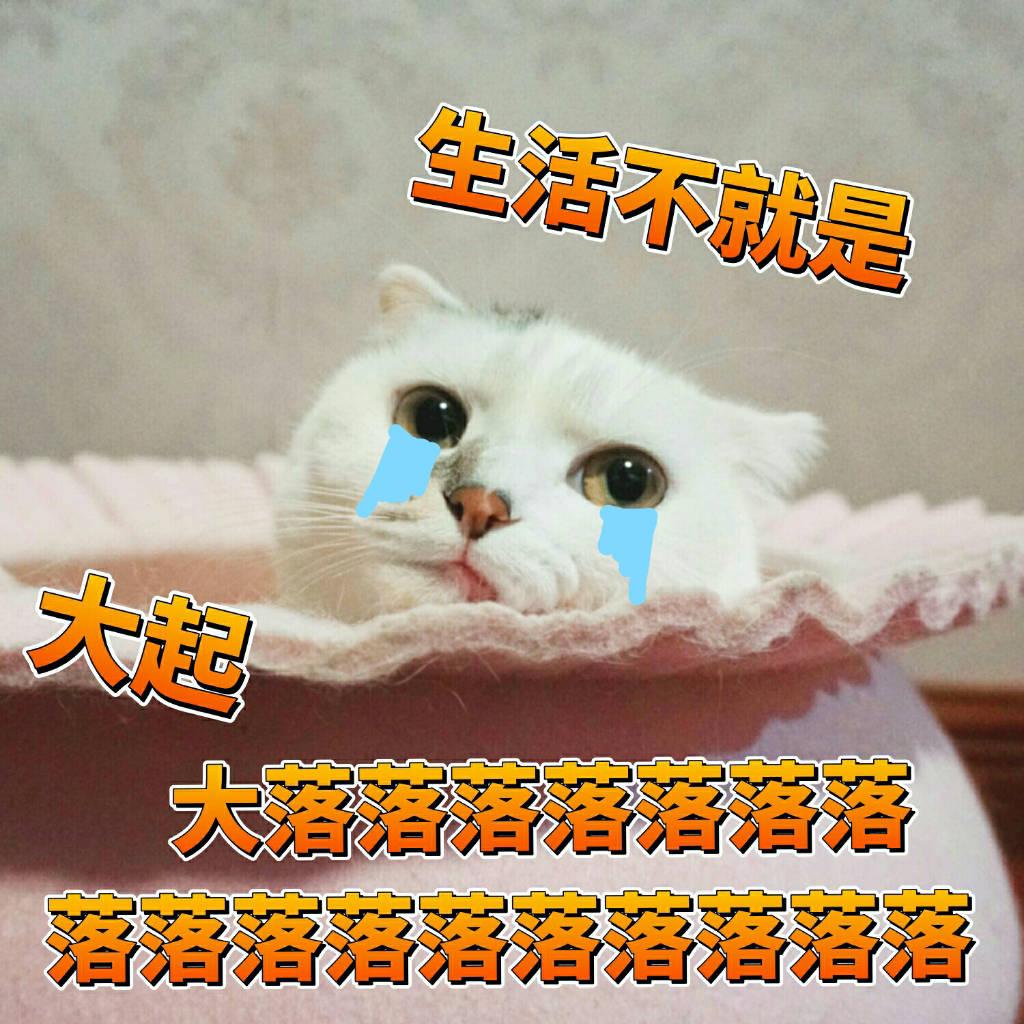 一组可爱猫咪图片的头像分享可爱表情包表情蜜桃兔子图片