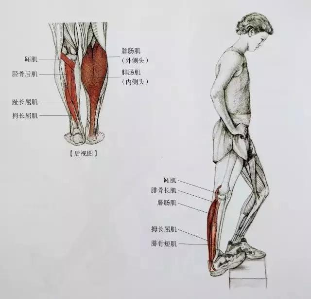 四月不减肥,五月小粗腿!教你一招健身后避免粗腿!增肌又瘦脸图片