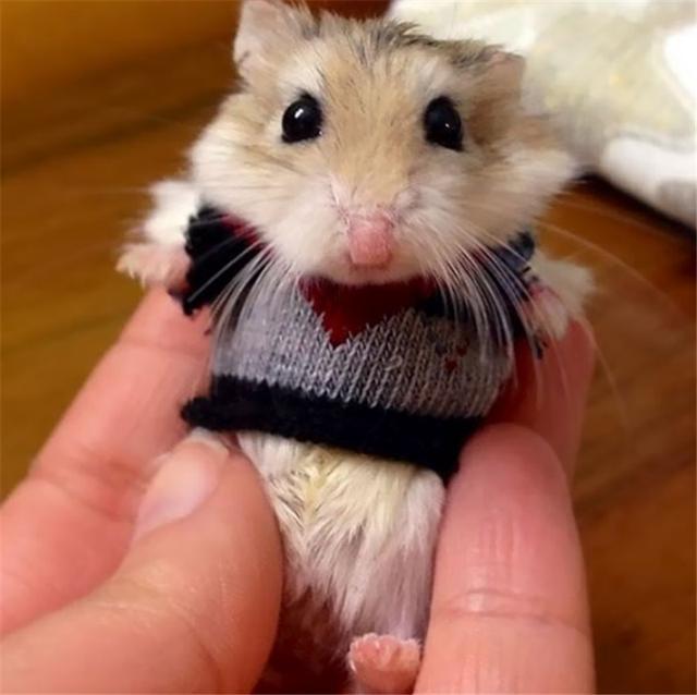 冬天到了,蚂蚁们也要开始穿文件了?小衣服动物图片