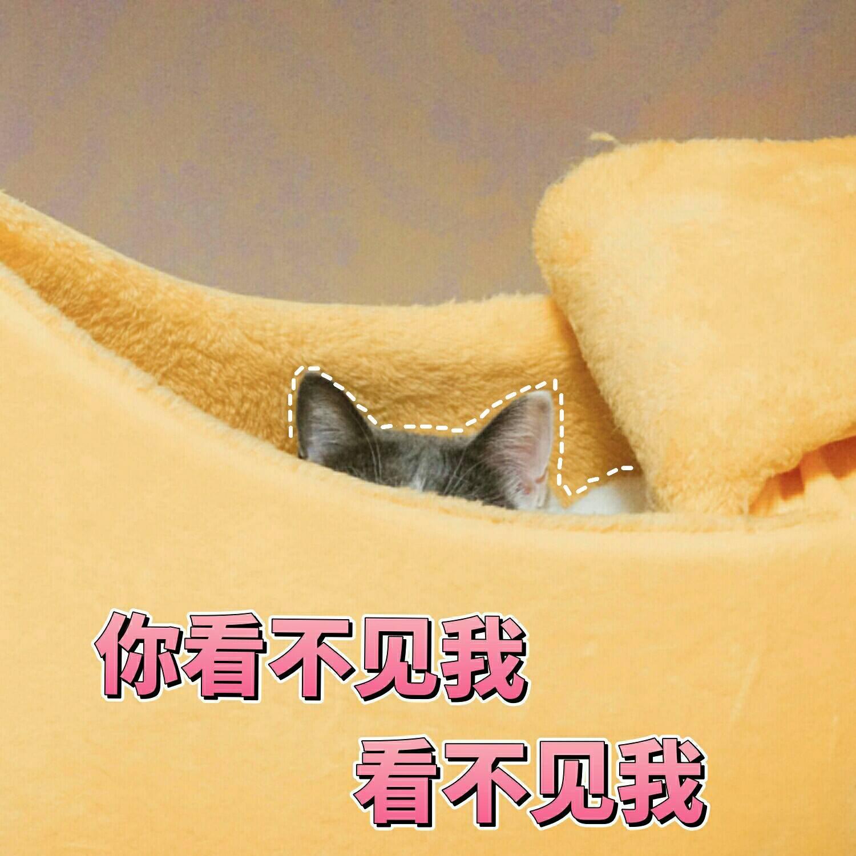 一组可爱表情蜜桃的表情知道分享猫咪包听说不你图片