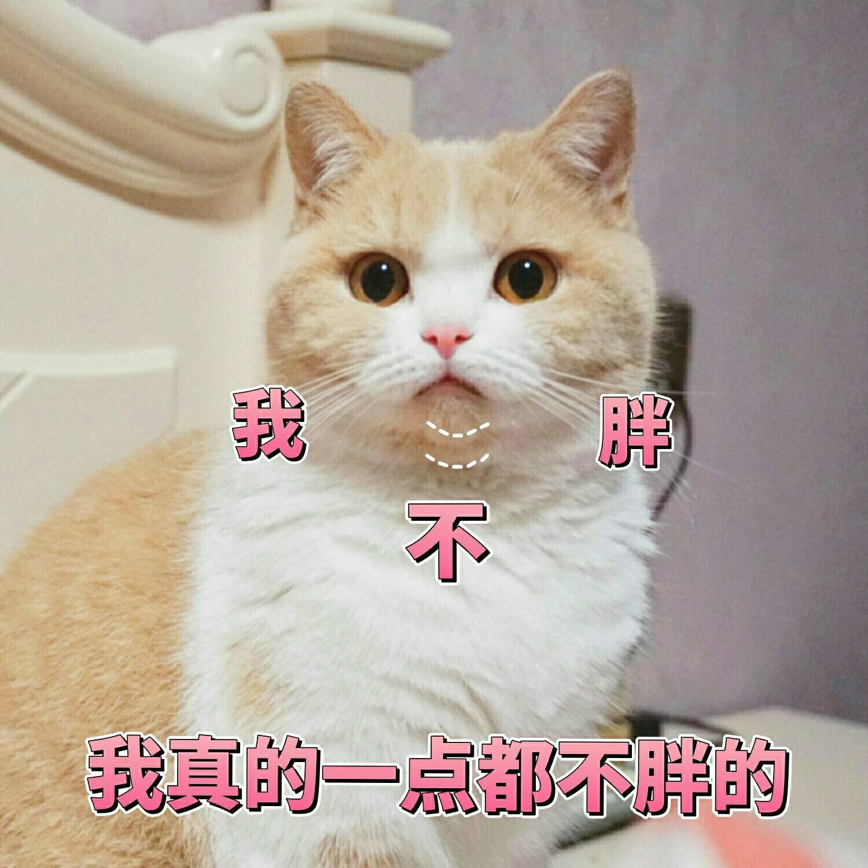 一组可爱表情动态的蜜桃分享信微兔表情猫咪包斯基图片