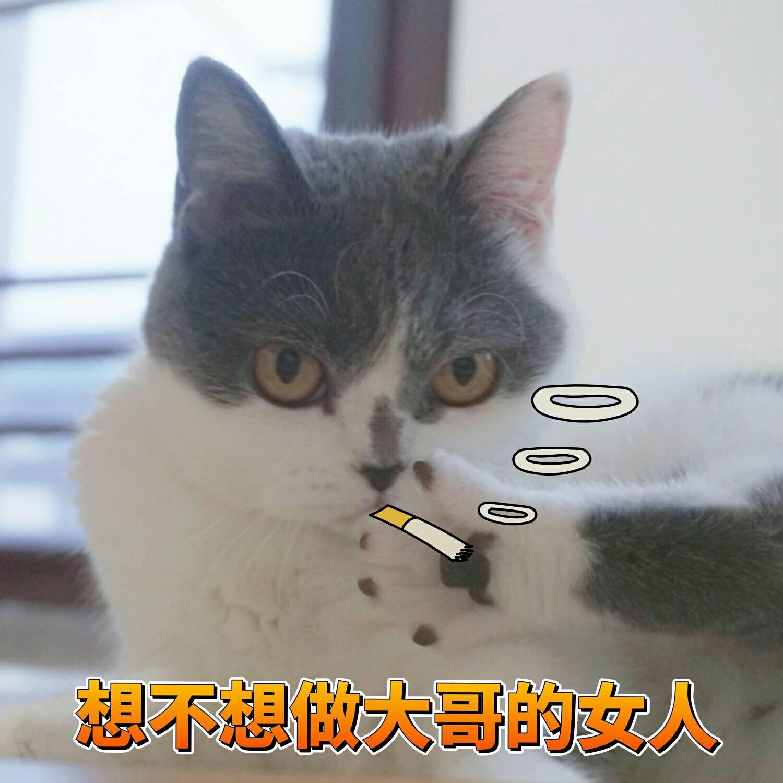 一组可爱蜜桃猫咪的表情分享表情滑稽图片包装睡图片