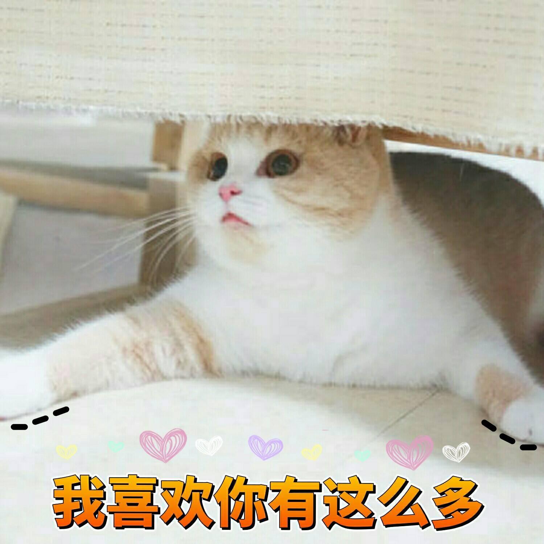 一组可爱表情蜜桃的表情喷水猫咪包恶分享龙图片