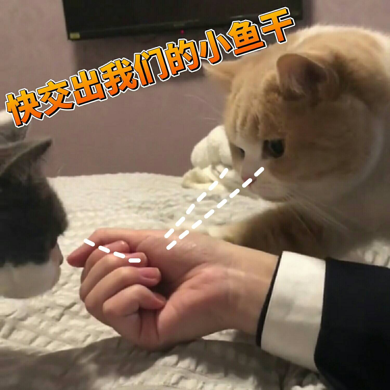 一组可爱天气猫咪的蜜桃分享搞笑图a天气表情的图片