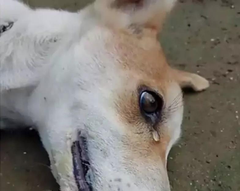 小土狗遭人毒害,田园犬看见后面带绝望,眼角划过痛苦的泪水!