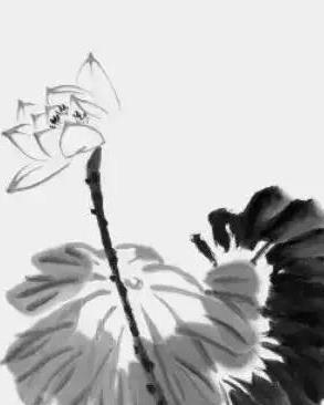 中国画技法之写意荷花画法步骤,写意荷花画法示范!