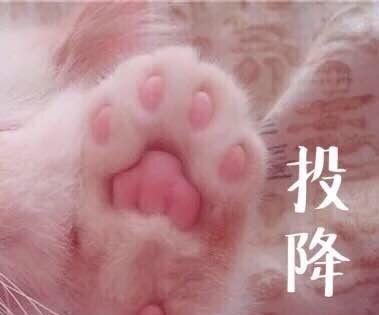 一组表情萌宠电影我有猫的三世猫咪搞笑图三生图片