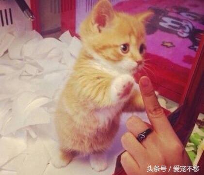 宠物店小可爱靠击掌来卖萌?表情有点可爱