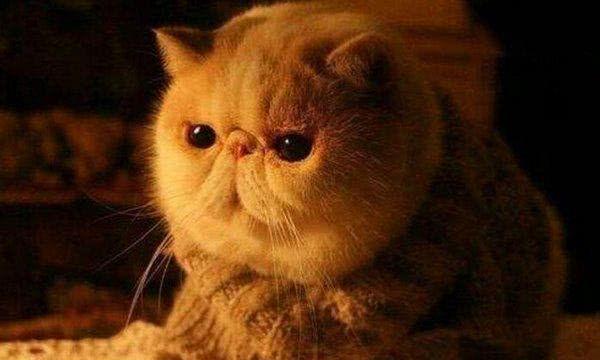 地球上10大最萌最可爱的猫咪,橘猫第六,加菲第三,你最